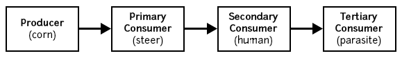 This progression diagram shows the relationship between ideas that are part of a process, in this case, a food chain.